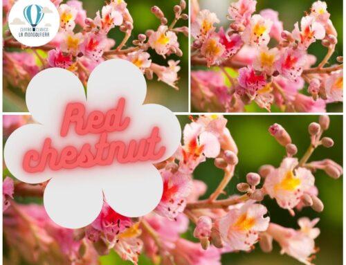 I fiori che non ti aspetti #2